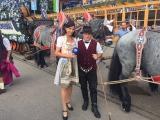 prachtvolle Pferde mit Fuhrmann Franz Weber aus Auerbach